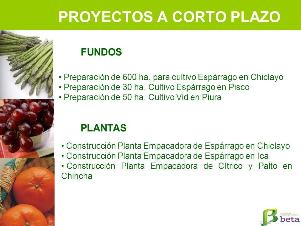 PROYECTOS A CORTO PLAZO Preparación de 600 ha. para cultivo Espárrago en Chiclayo Preparación de 30 ha. Cultivo Espárrago en Pisco Preparación de 50 h