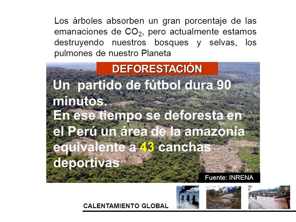 CALENTAMIENTO GLOBAL Los árboles absorben un gran porcentaje de las emanaciones de CO 2, pero actualmente estamos destruyendo nuestros bosques y selva