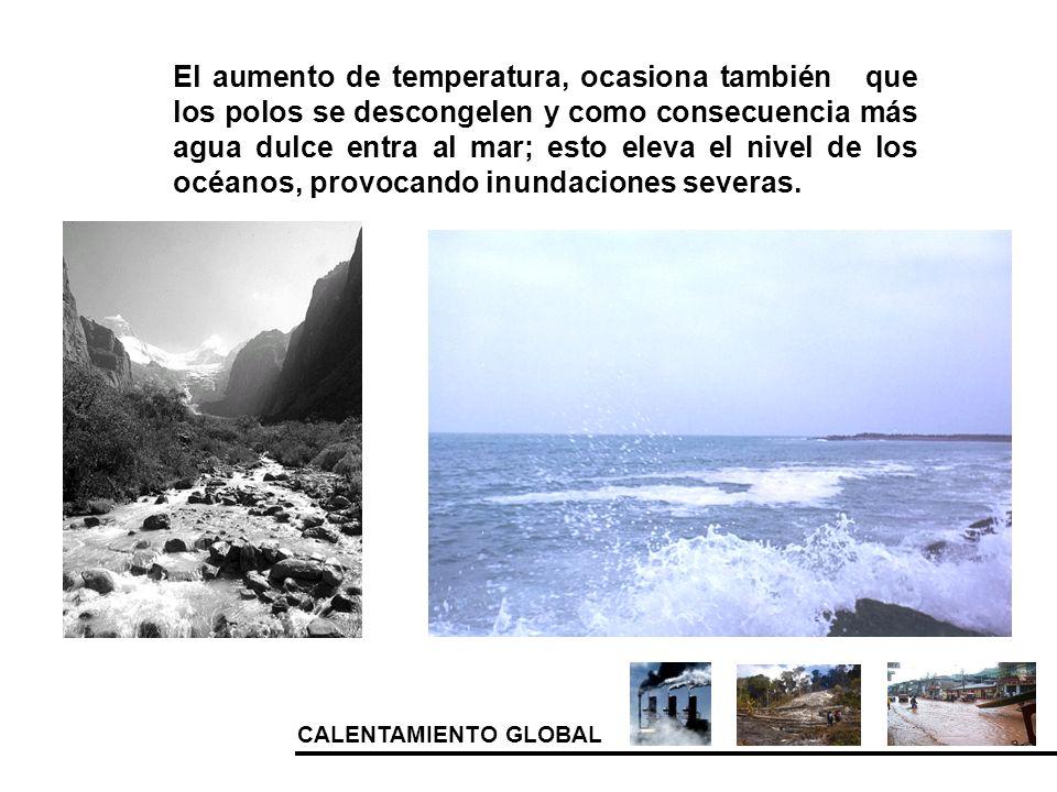 CALENTAMIENTO GLOBAL El aumento de temperatura, ocasiona también que los polos se descongelen y como consecuencia más agua dulce entra al mar; esto el