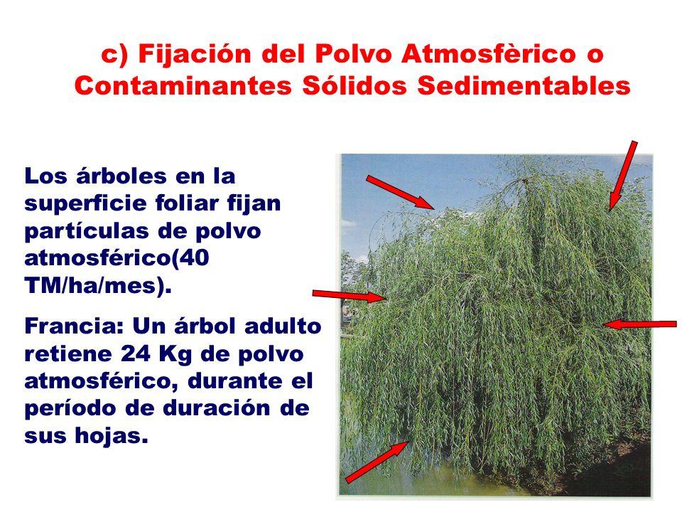 Los árboles en la superficie foliar fijan partículas de polvo atmosférico(40 TM/ha/mes). Francia: Un árbol adulto retiene 24 Kg de polvo atmosférico,