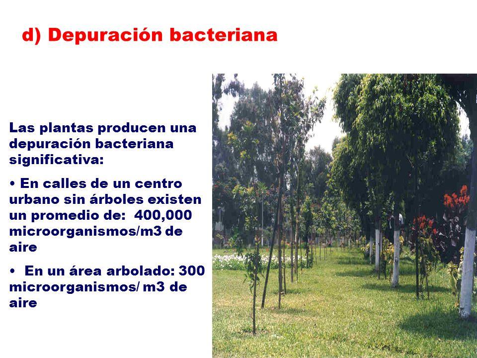 Las plantas producen una depuración bacteriana significativa: En calles de un centro urbano sin árboles existen un promedio de: 400,000 microorganismo