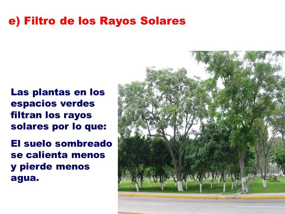 Las plantas en los espacios verdes filtran los rayos solares por lo que: El suelo sombreado se calienta menos y pierde menos agua. e) Filtro de los Ra
