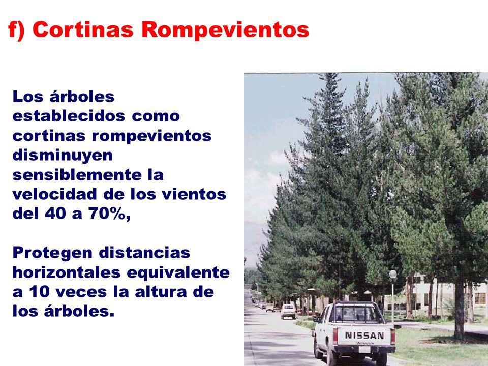 Los árboles establecidos como cortinas rompevientos disminuyen sensiblemente la velocidad de los vientos del 40 a 70%, Protegen distancias horizontale