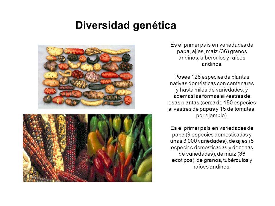Es el primer país en variedades de papa, ajíes, maíz (36) granos andinos, tubérculos y raíces andinos. Posee 128 especies de plantas nativas doméstica