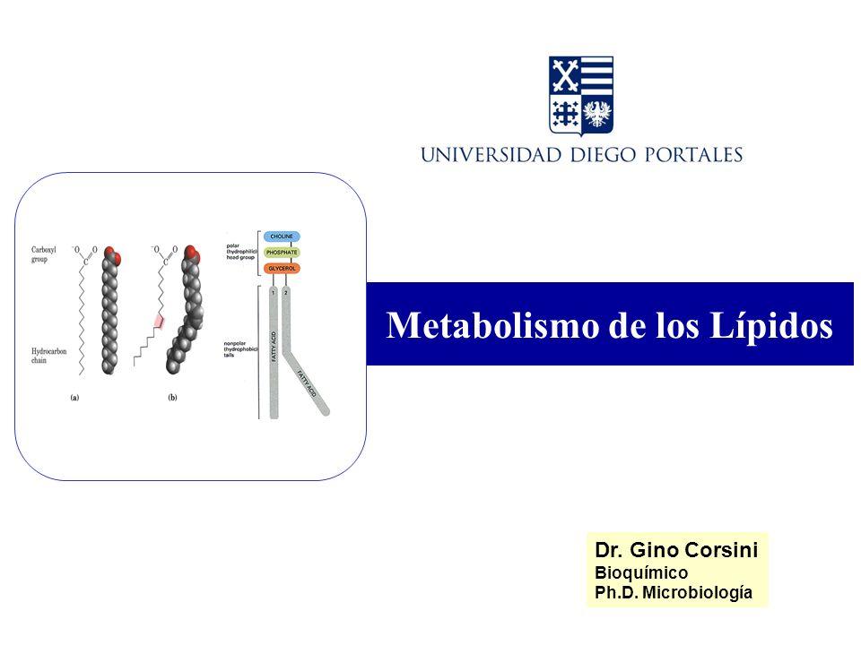 Metabolismo de los Lípidos Dr. Gino Corsini Bioquímico Ph.D. Microbiología