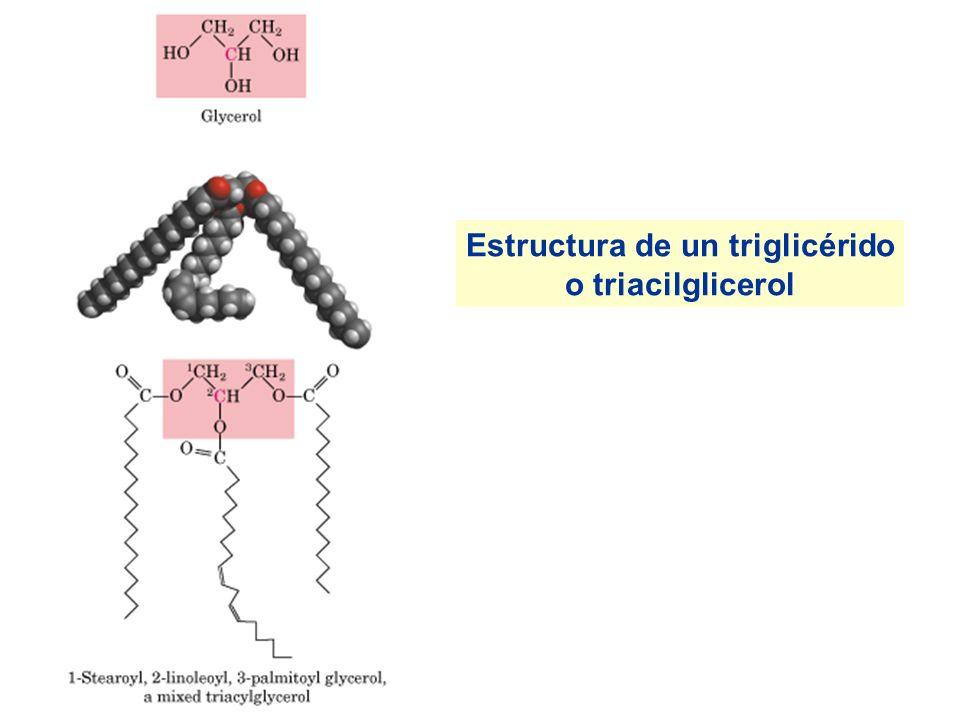 saturadoinsaturado Estructura de un ácido graso