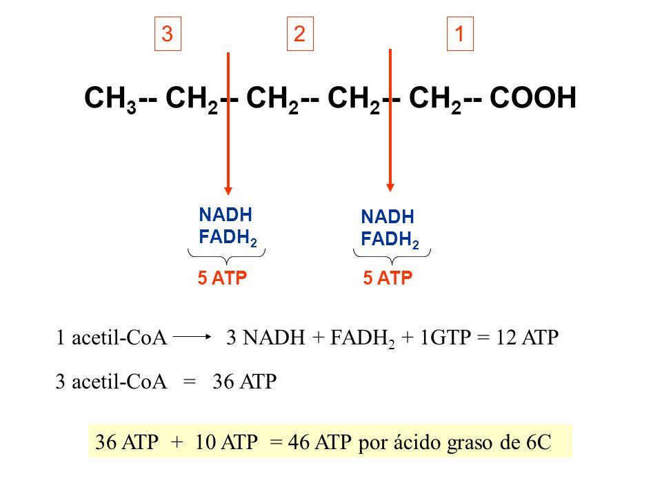 CH 3 -- CH 2 -- CH 2 -- CH 2 -- CH 2 -- COOH 123 1 acetil-CoA3 NADH + FADH 2 + 1GTP = 12 ATP 3 acetil-CoA = 36 ATP NADH FADH 2 NADH FADH 2 5 ATP 36 AT