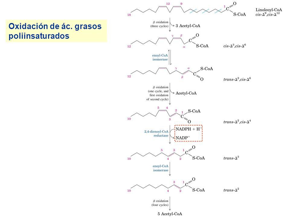 Oxidación de ác. grasos poliinsaturados