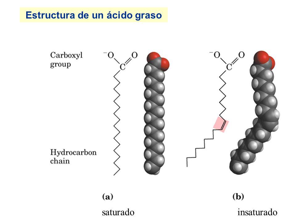 Estructura de un fosfolípido