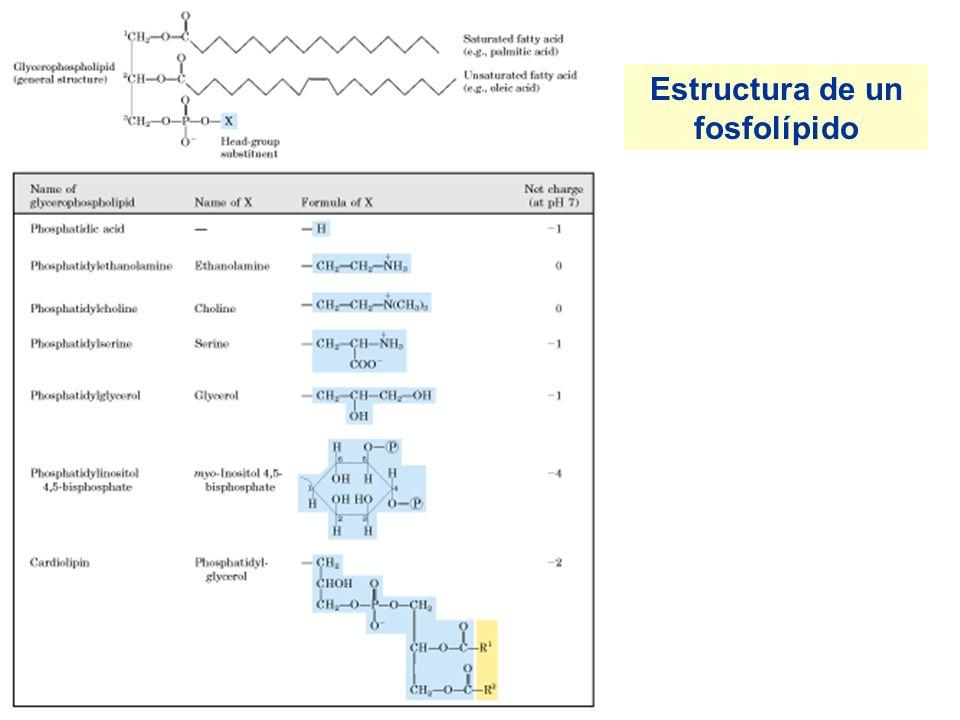 Localización subcelular del metabolismo de los lípidos