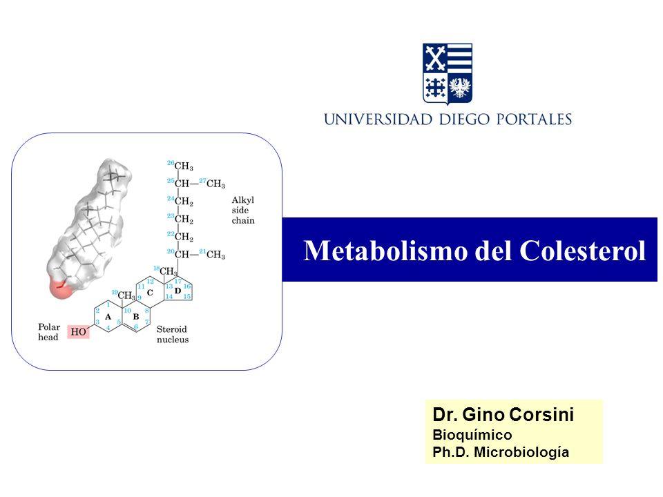 Metabolismo del Colesterol Dr. Gino Corsini Bioquímico Ph.D. Microbiología