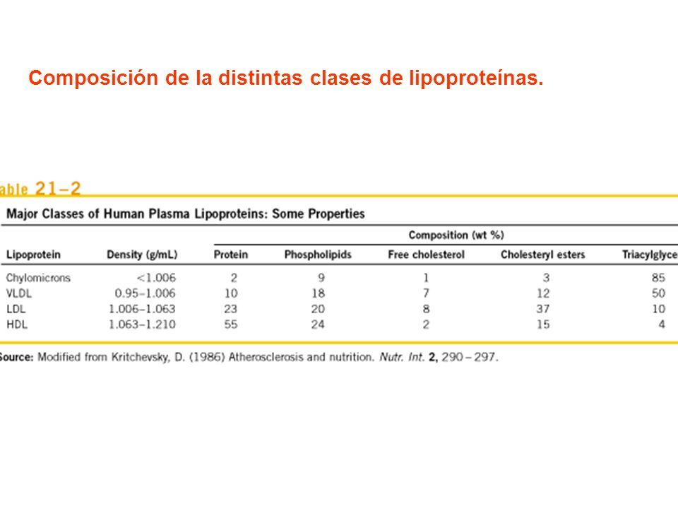Composición de la distintas clases de lipoproteínas.