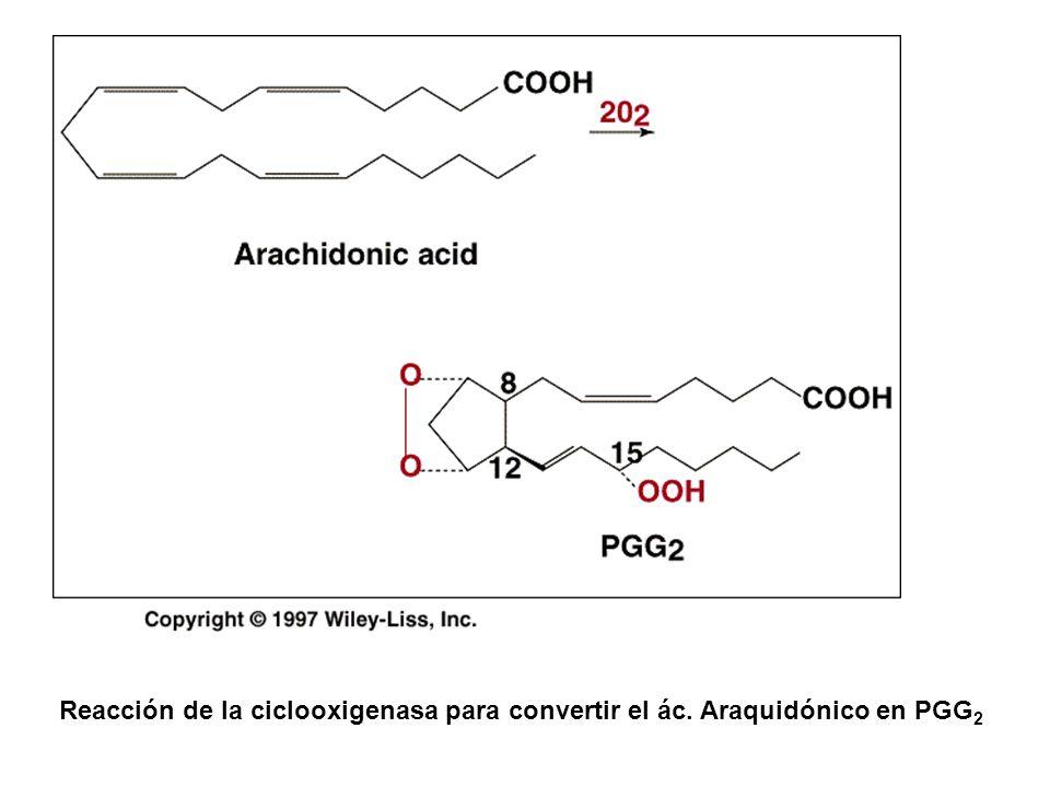 Reacción de la ciclooxigenasa para convertir el ác. Araquidónico en PGG 2