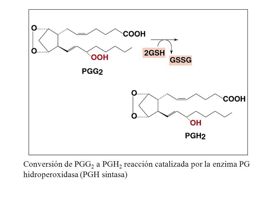Conversión de PGG 2 a PGH 2 reacción catalizada por la enzima PG hidroperoxidasa (PGH sintasa)