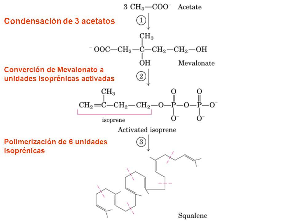 Estructura de las principales prostaglandinas (A, E y F)