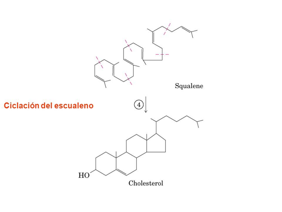 El colesterol y otros lípidos son transportados en el plasma por las lipoproteínas.