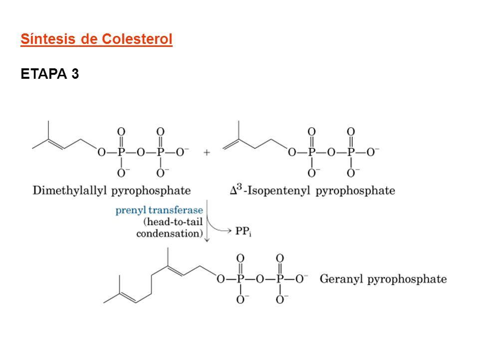 Síntesis de Colesterol ETAPA 3
