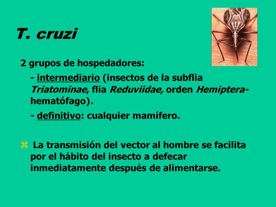 T. cruzi 2 grupos de hospedadores: - intermediario (insectos de la subflia Triatominae, flia Reduviidae, orden Hemiptera- hematófago). - definitivo: c