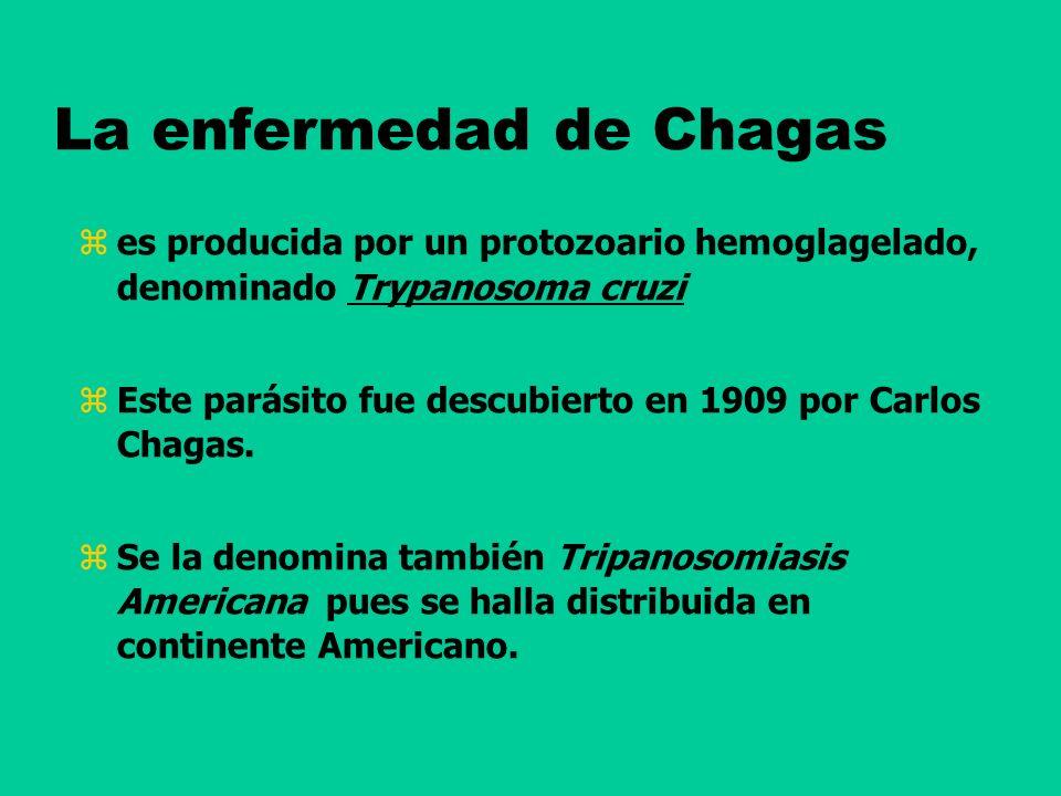 La enfermedad de Chagas es producida por un protozoario hemoglagelado, denominado Trypanosoma cruzi Este parásito fue descubierto en 1909 por Carlos C