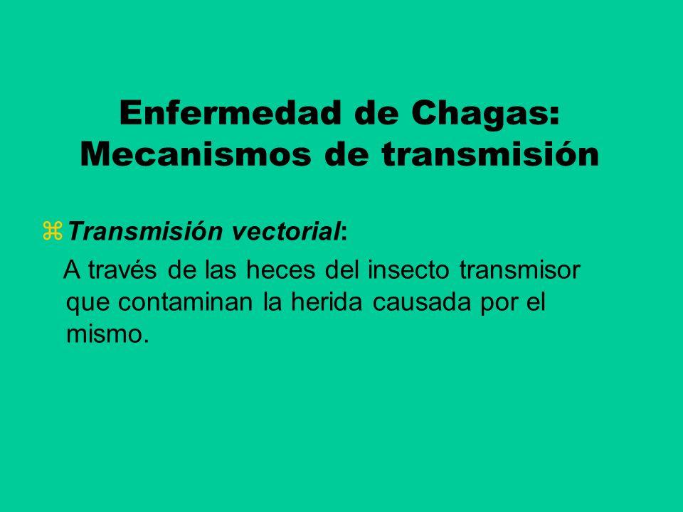 Enfermedad de Chagas: Mecanismos de transmisión Transmisión vectorial: A través de las heces del insecto transmisor que contaminan la herida causada p