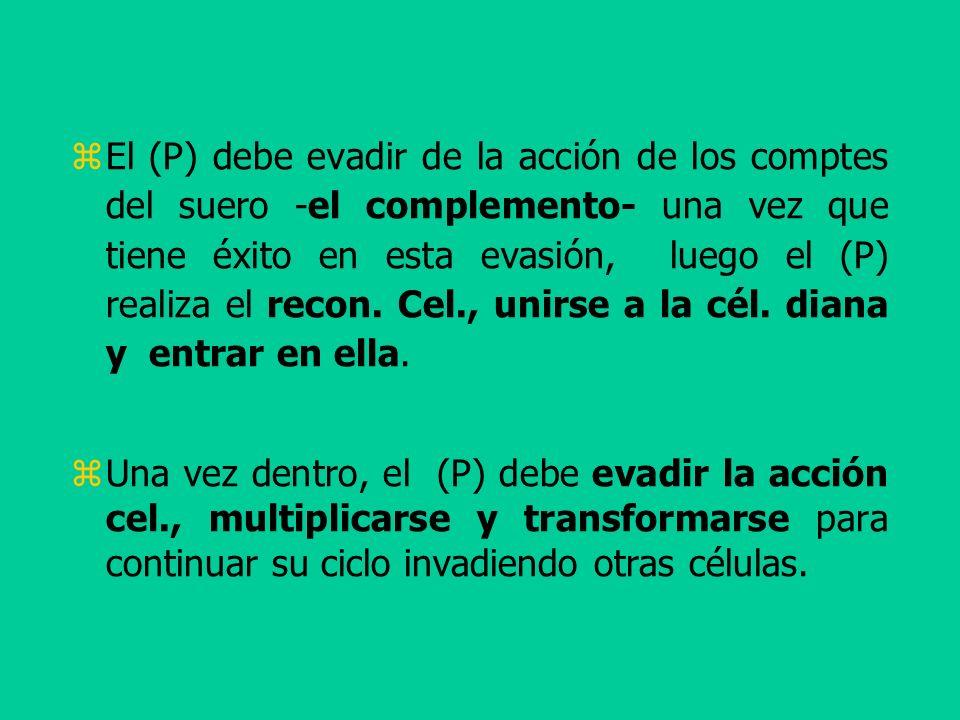 El (P) debe evadir de la acción de los comptes del suero -el complemento- una vez que tiene éxito en esta evasión, luego el (P) realiza el recon. Cel.