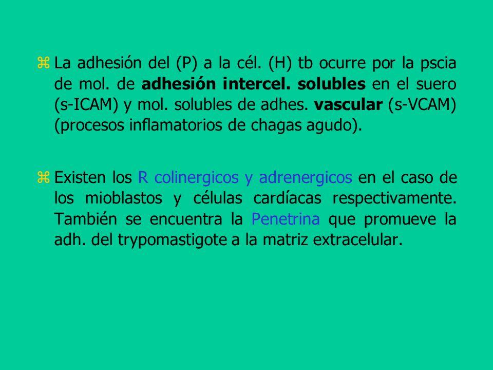 La adhesión del (P) a la cél. (H) tb ocurre por la pscia de mol. de adhesión intercel. solubles en el suero (s-ICAM) y mol. solubles de adhes. vascula