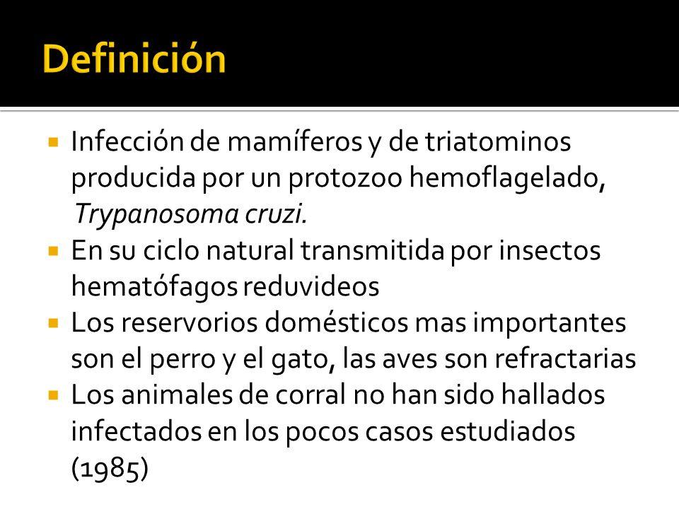por manipulación del vector animales infectados cultivos celulares de T.