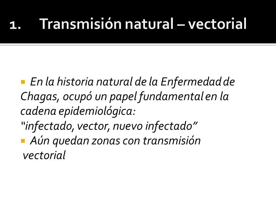 El primer caso documentado de este tipo de transmisión fue en 1965, en Teutonia, Río Grande do Sul, Brasil, donde se registraron 17 pacientes con enfermedad de Chagas aguda simultánea.