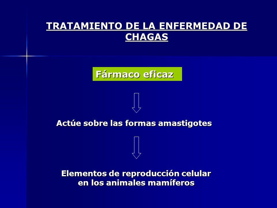 TRATAMIENTO DE LA ENFERMEDAD DE CHAGAS Fármaco eficaz Actúe sobre las formas amastigotes Elementos de reproducción celular en los animales mamíferos