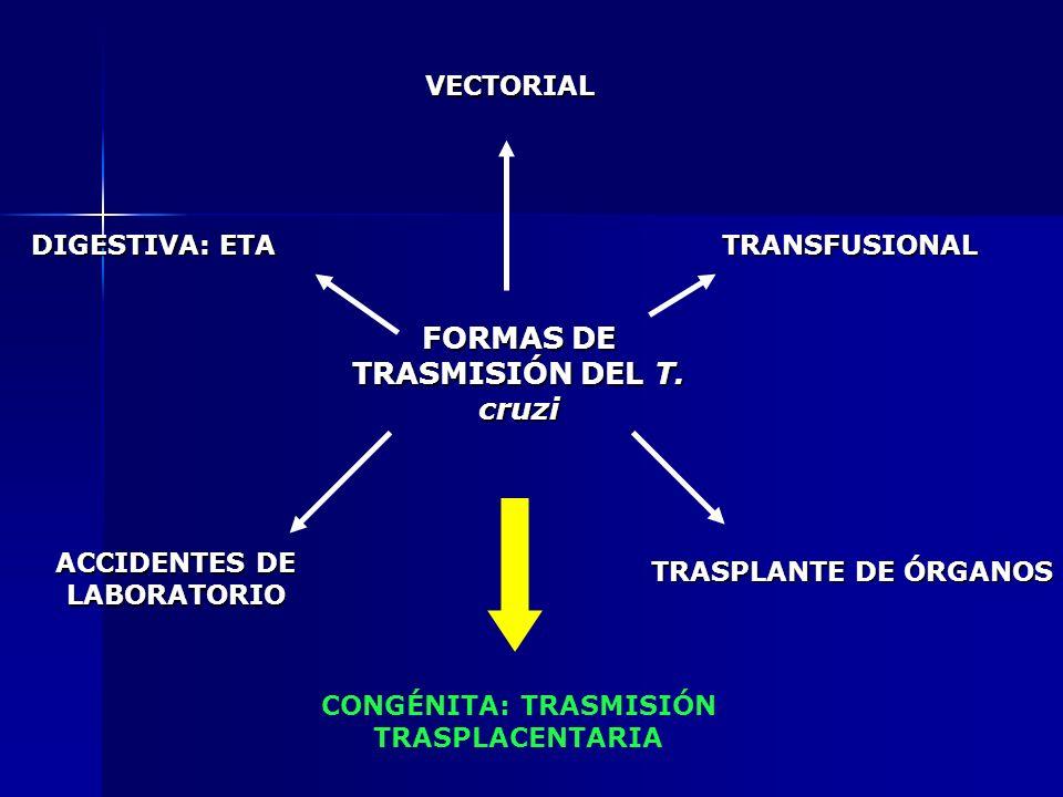 FORMAS DE TRASMISIÓN DEL T. cruzi VECTORIAL TRANSFUSIONAL TRASPLANTE DE ÓRGANOS DIGESTIVA: ETA ACCIDENTES DE LABORATORIO CONGÉNITA: TRASMISIÓN TRASPLA