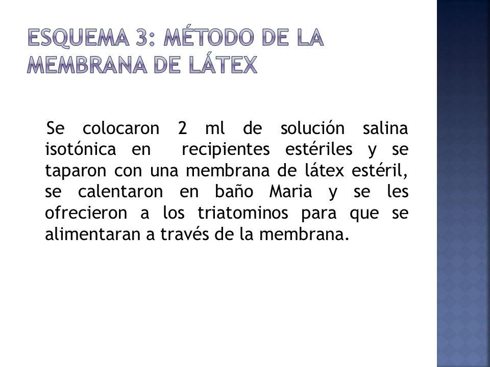 Se colocaron 2 ml de solución salina isotónica en recipientes estériles y se taparon con una membrana de látex estéril, se calentaron en baño Maria y