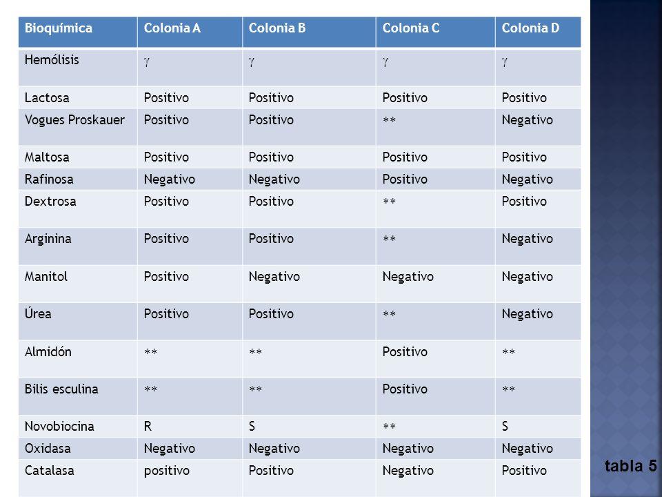 Los resultados muestran pocas diferencias entre las bacterias aisladas. BioquímicaColonia AColonia BColonia CColonia D Hemólisis LactosaPositivo Vogue