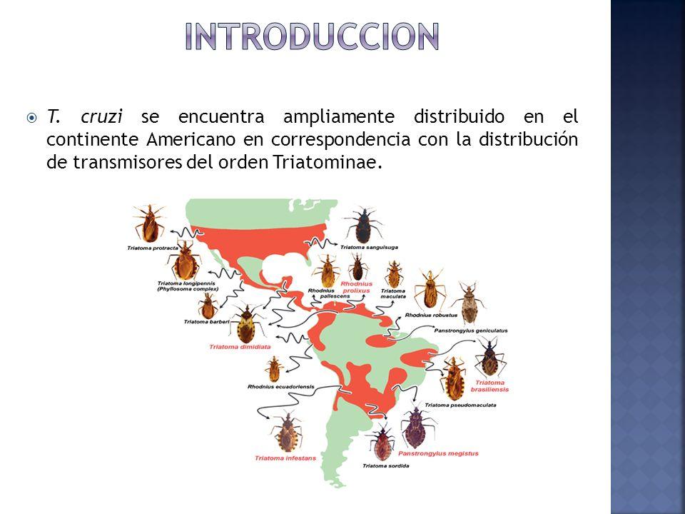 T. cruzi se encuentra ampliamente distribuido en el continente Americano en correspondencia con la distribución de transmisores del orden Triatominae.