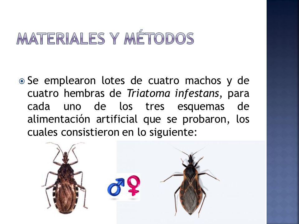 Se emplearon lotes de cuatro machos y de cuatro hembras de Triatoma infestans, para cada uno de los tres esquemas de alimentación artificial que se pr