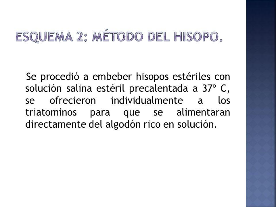Se procedió a embeber hisopos estériles con solución salina estéril precalentada a 37º C, se ofrecieron individualmente a los triatominos para que se