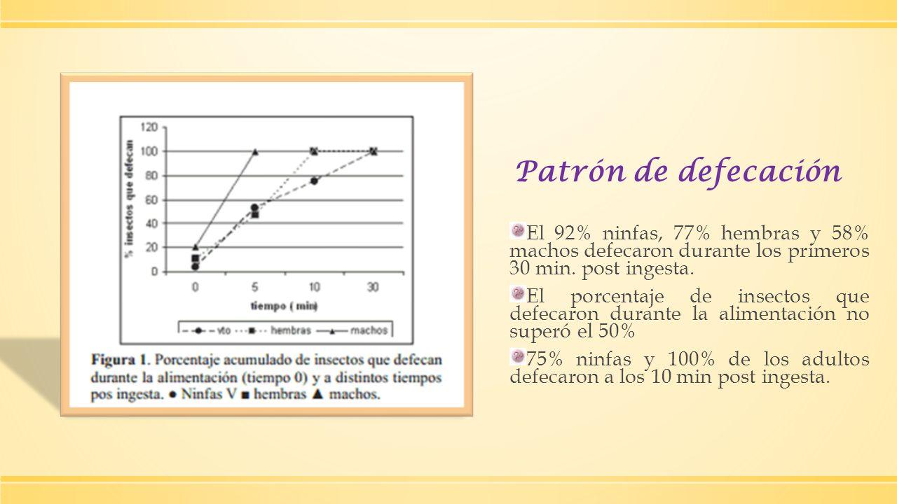Patrón de defecación El 92% ninfas, 77% hembras y 58% machos defecaron durante los primeros 30 min. post ingesta. El porcentaje de insectos que defeca