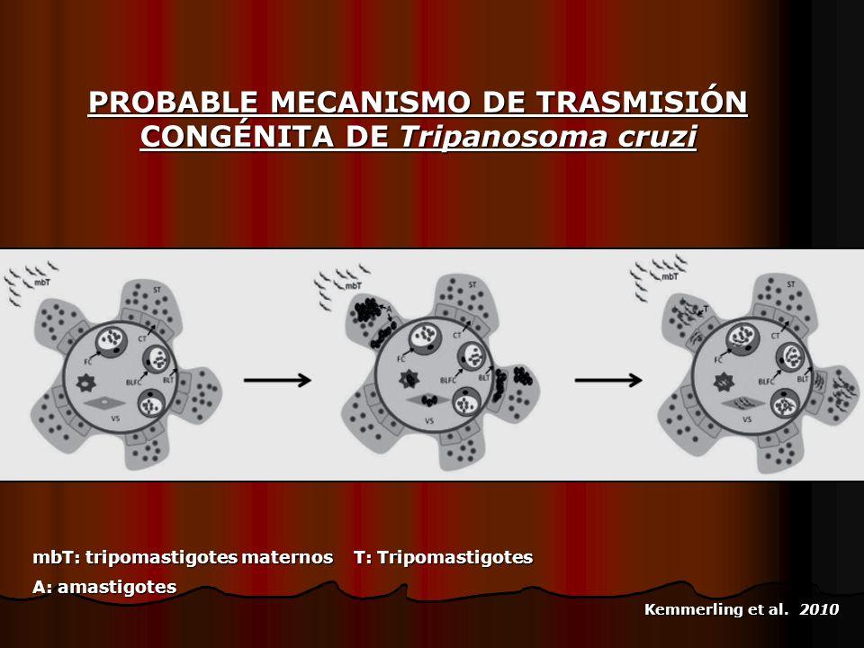 mbT: tripomastigotes maternos T: Tripomastigotes A: amastigotes PROBABLE MECANISMO DE TRASMISIÓN CONGÉNITA DE Tripanosoma cruzi Kemmerling et al. 2010