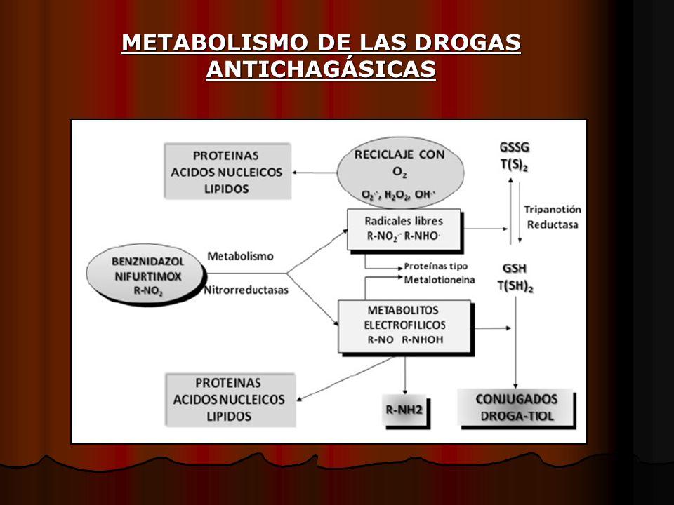 METABOLISMO DE LAS DROGAS ANTICHAGÁSICAS