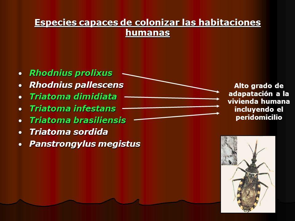Especies capaces de colonizar las habitaciones humanas Rhodnius prolixus Rhodnius prolixus Rhodnius pallescens Rhodnius pallescens Triatoma dimidiata