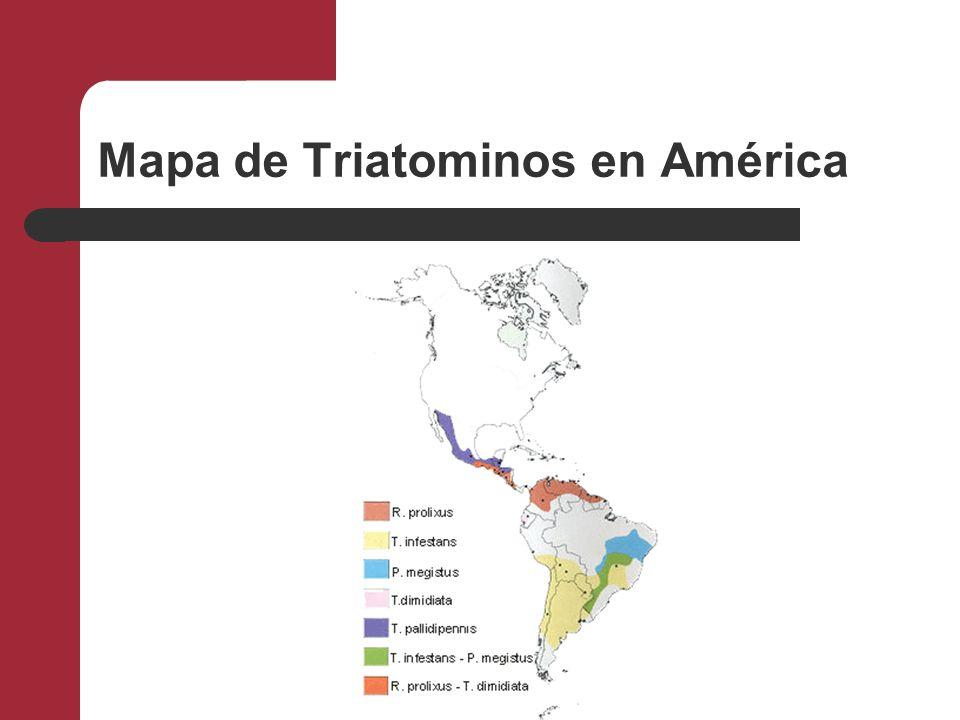Mapa de Triatominos en América
