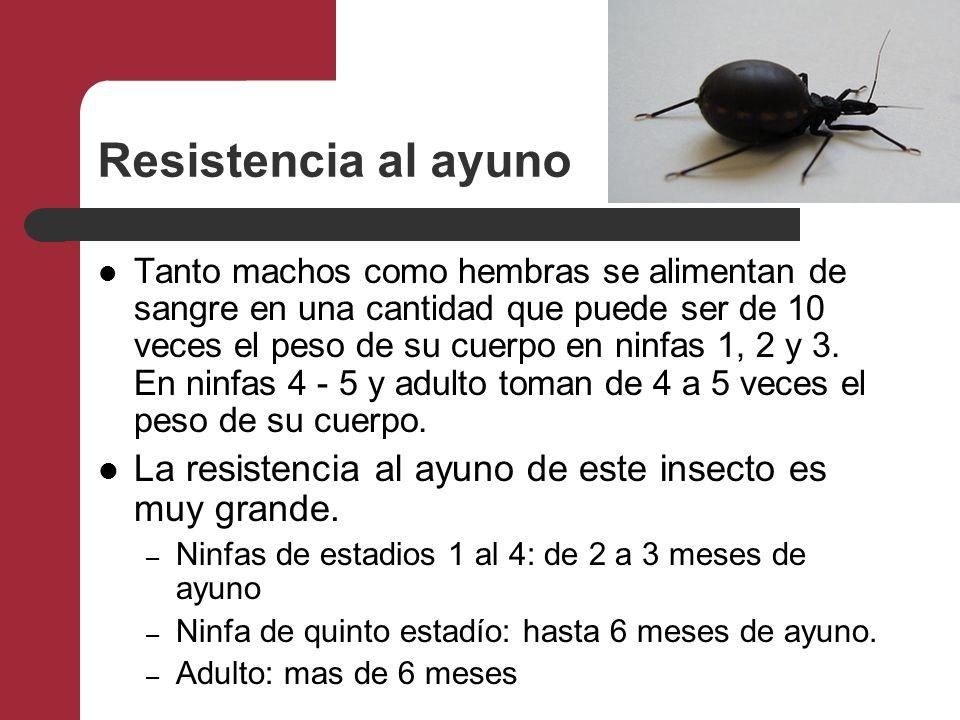 Resistencia al ayuno Tanto machos como hembras se alimentan de sangre en una cantidad que puede ser de 10 veces el peso de su cuerpo en ninfas 1, 2 y