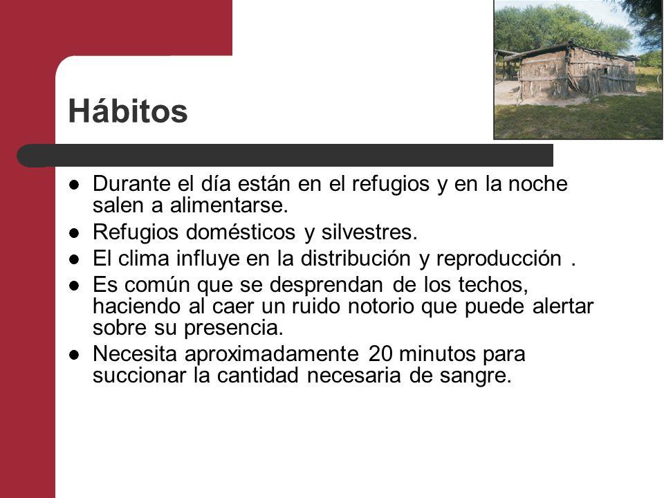 Hábitos Durante el día están en el refugios y en la noche salen a alimentarse. Refugios domésticos y silvestres. El clima influye en la distribución y