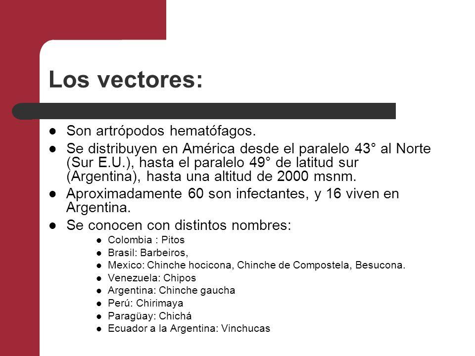 Los vectores: Son artrópodos hematófagos. Se distribuyen en América desde el paralelo 43° al Norte (Sur E.U.), hasta el paralelo 49° de latitud sur (A
