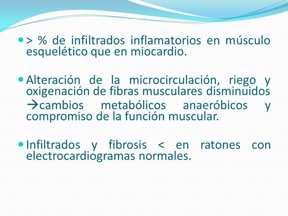 > % de infiltrados inflamatorios en músculo esquelético que en miocardio. Alteración de la microcirculación, riego y oxigenación de fibras musculares