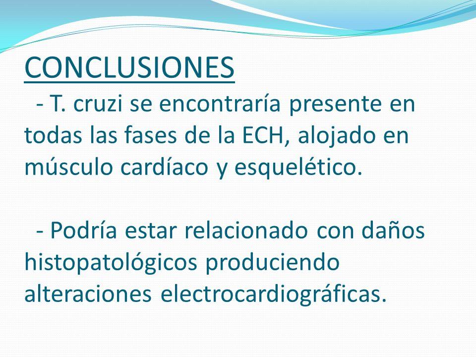CONCLUSIONES - T. cruzi se encontraría presente en todas las fases de la ECH, alojado en músculo cardíaco y esquelético. - Podría estar relacionado co