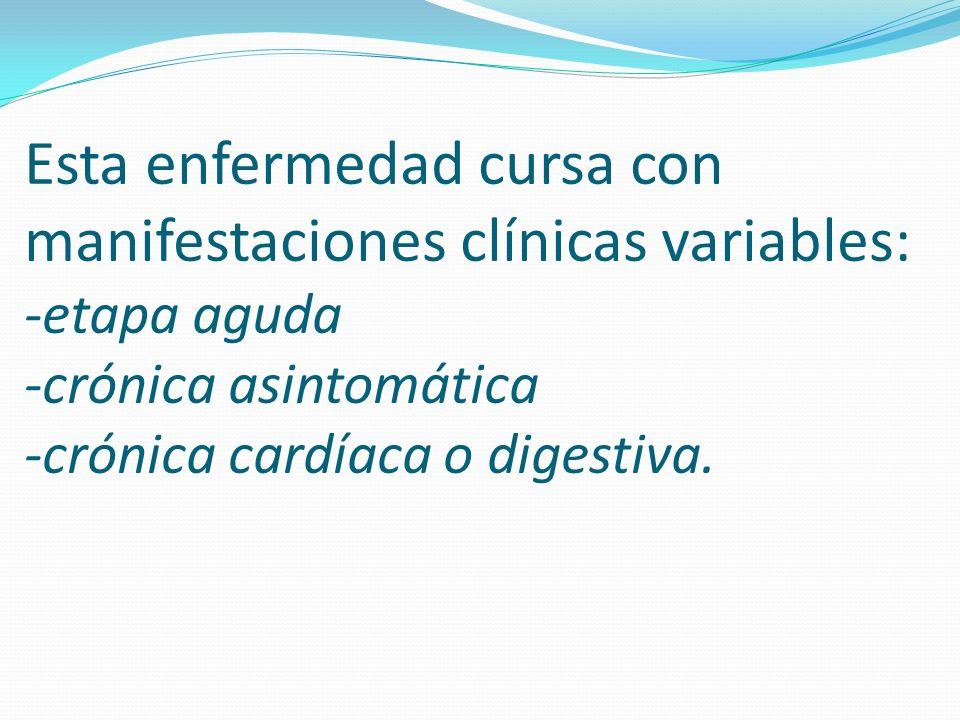 Esta enfermedad cursa con manifestaciones clínicas variables: -etapa aguda -crónica asintomática -crónica cardíaca o digestiva.