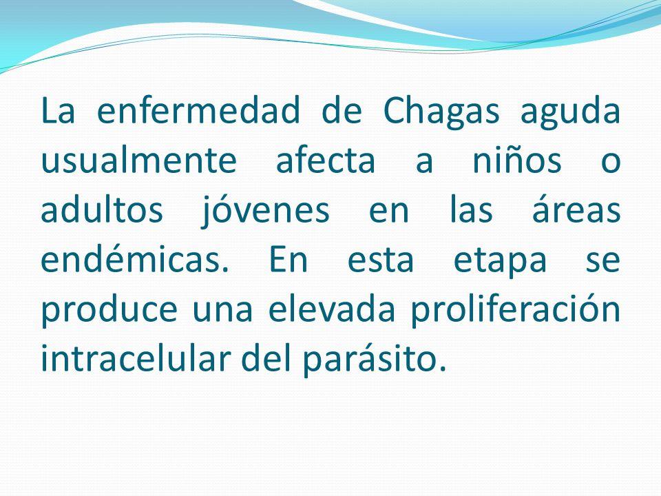 La enfermedad de Chagas aguda usualmente afecta a niños o adultos jóvenes en las áreas endémicas. En esta etapa se produce una elevada proliferación i