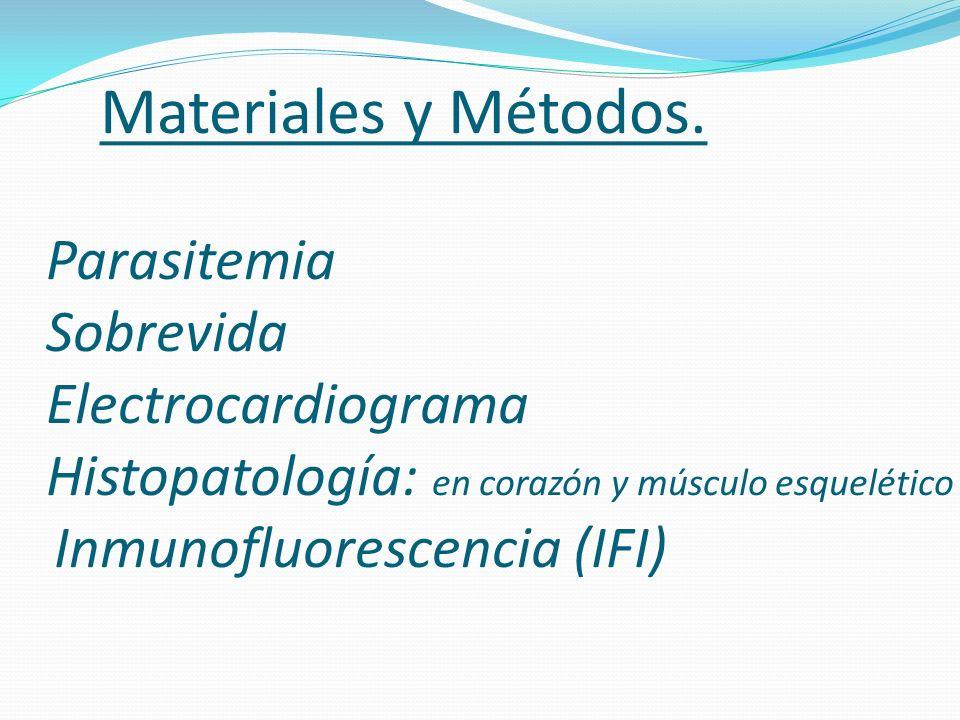 Materiales y Métodos. Parasitemia Sobrevida Electrocardiograma Histopatología: en corazón y músculo esquelético Inmunofluorescencia (IFI)