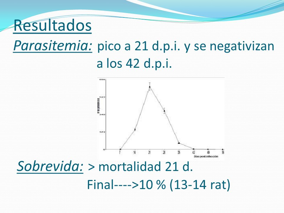 Resultados Parasitemia: pico a 21 d.p.i. y se negativizan a los 42 d.p.i. Sobrevida: > mortalidad 21 d. Final---->10 % (13-14 rat)