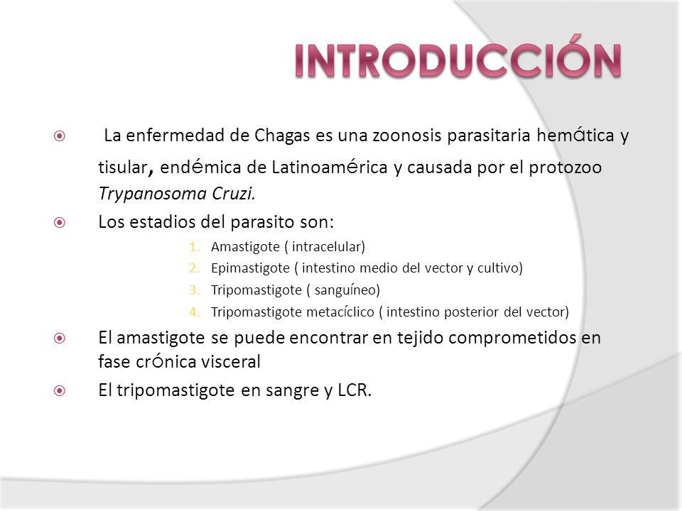 La enfermedad de Chagas es una zoonosis parasitaria hem á tica y tisular, end é mica de Latinoam é rica y causada por el protozoo Trypanosoma Cruzi. L